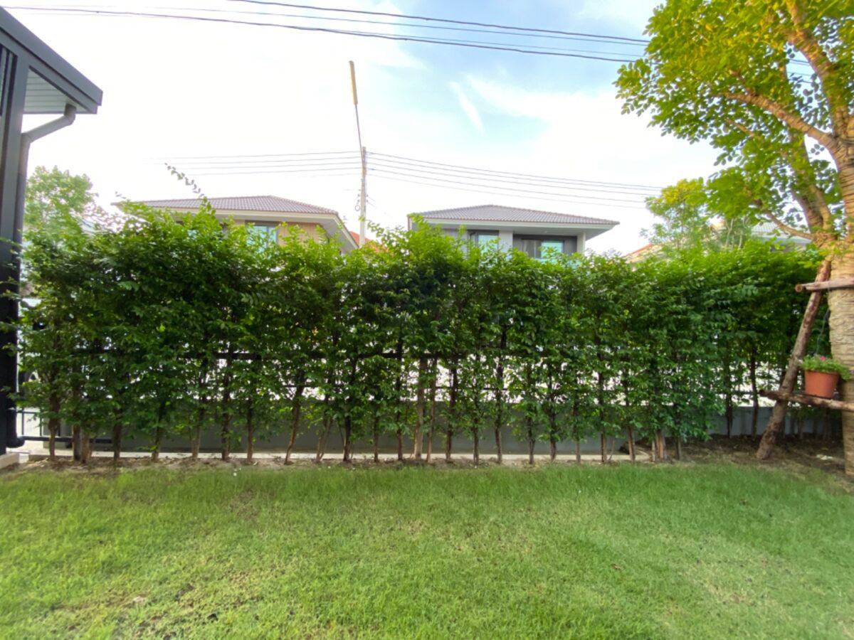 ต้นไม้แต่งรั้วบ้าน บังสายตา